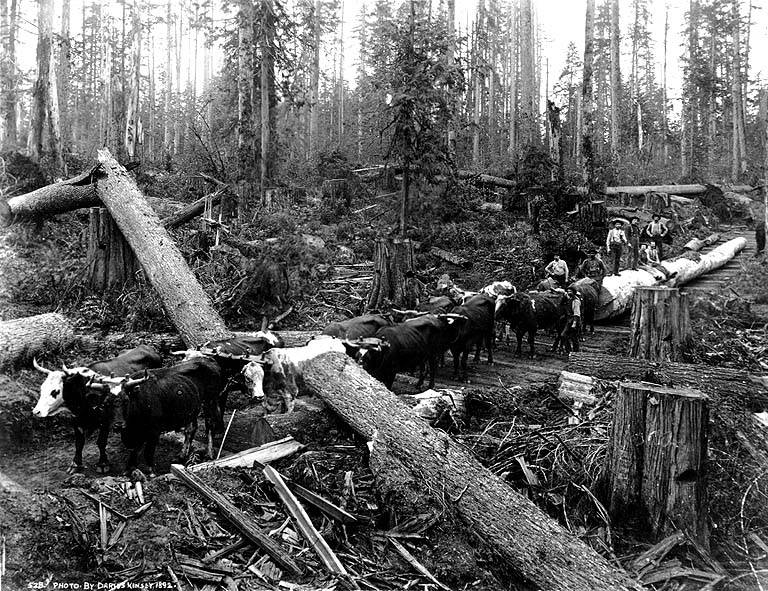 Skid road logging 6