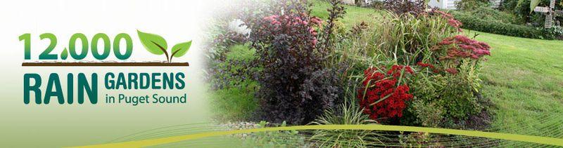12000 rain gardens in puget sound