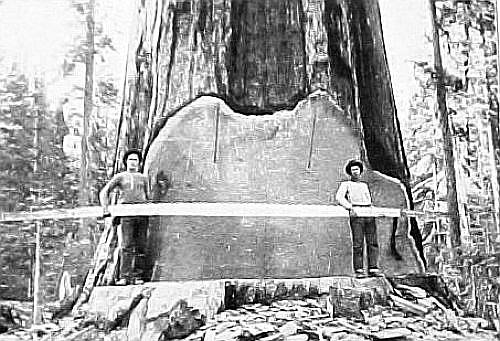 Big log cross section 2