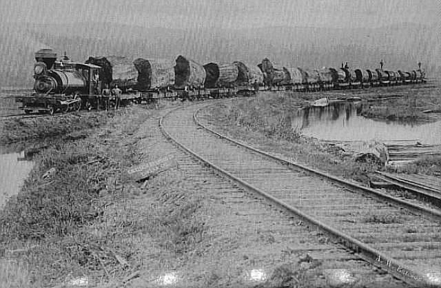 Big log on train