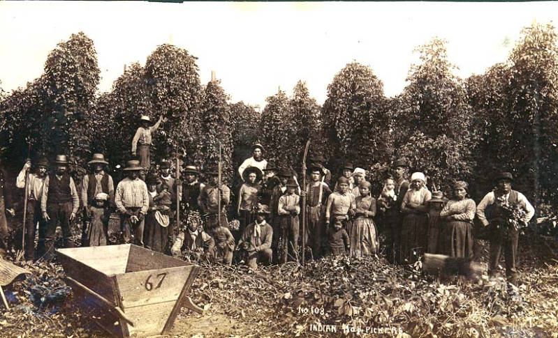 Hops pickers