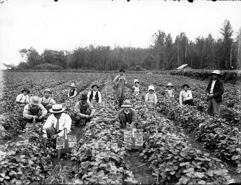 Berry pickers 1910