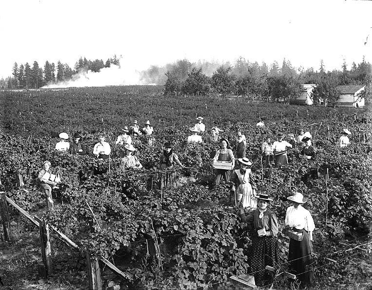 Berry picking 1910