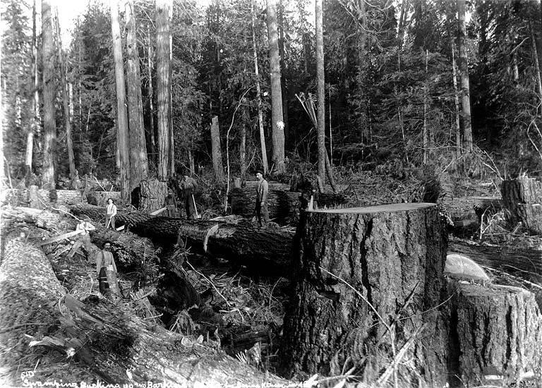 Crosscutting 1894