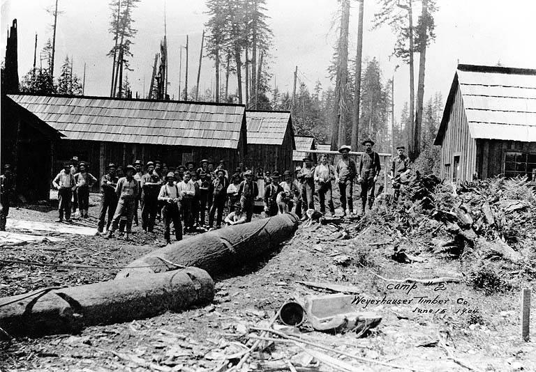 Walsh lake timber camp 1904