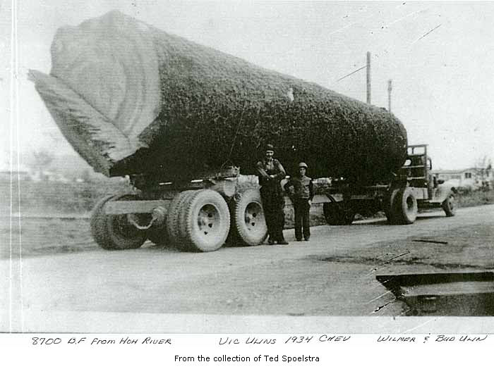 Huge log on truck