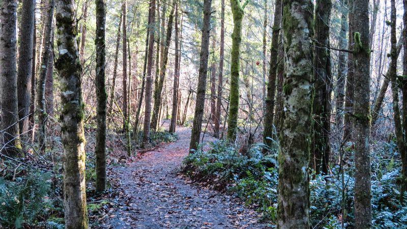 A trail 1-2984