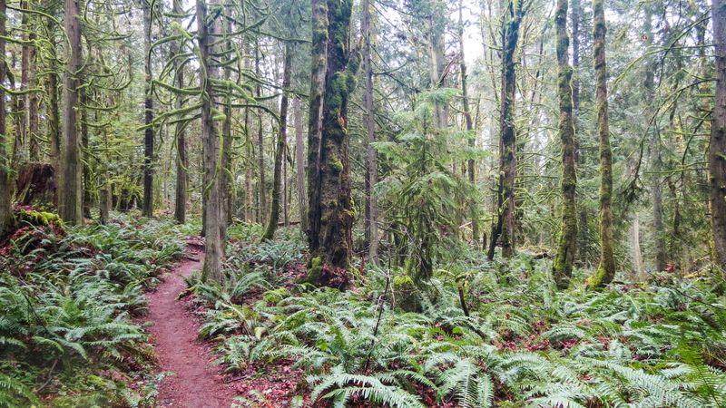 A trail 6-1
