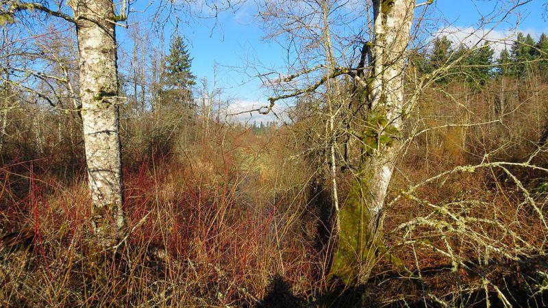 A Wetlands-2691