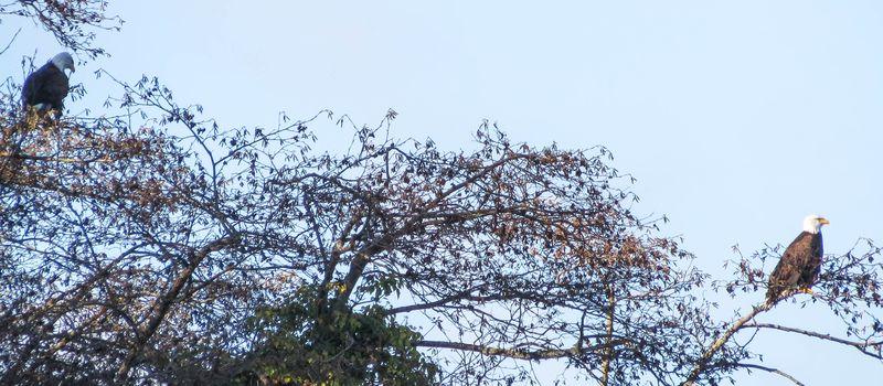A 2 eagles 3-2846