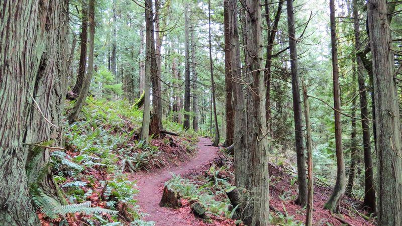 A trail 2-1