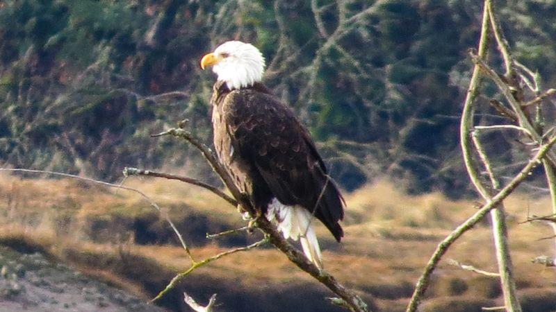 Eagle-2403