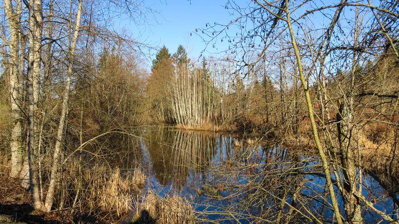 A Pond-2793