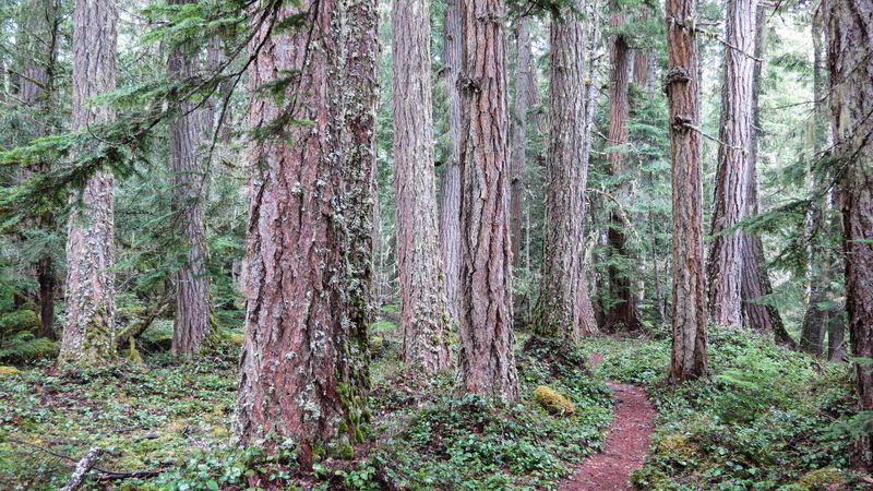 A trail 3-1