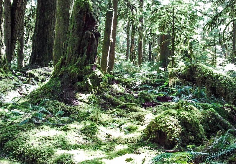 A rainforest 1-1