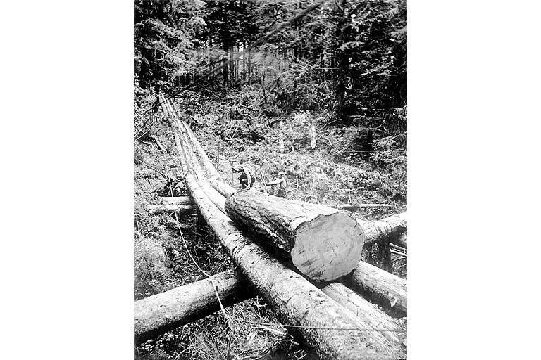 Log chute w log