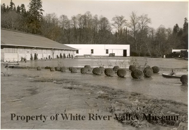 Soos Creek hatchery 1950 PO00547