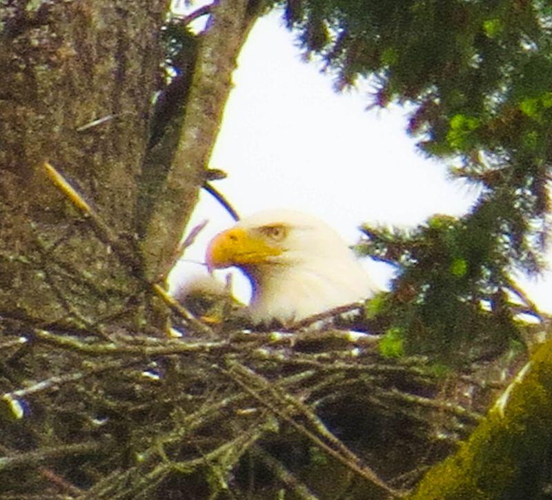 A mom & chick 4A-1