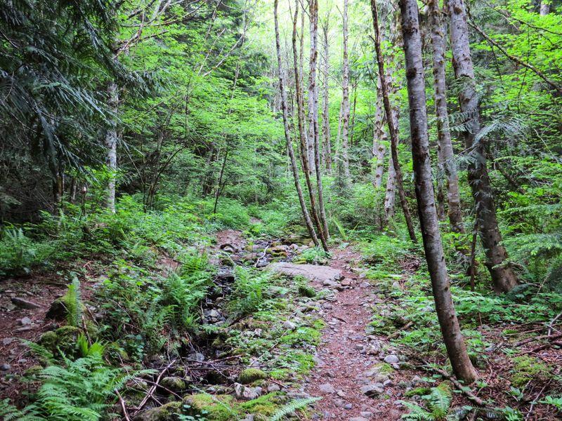 A trail 1-1