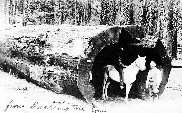 Horse inside of log