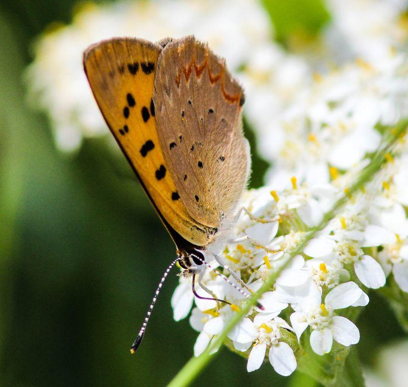 Butterfly 22-1