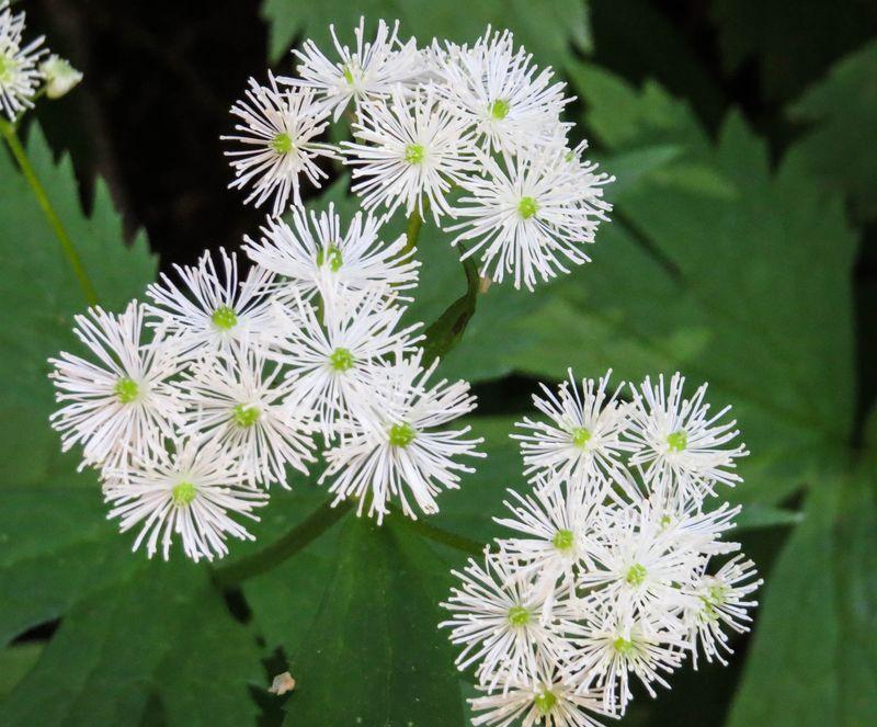 A wildflower 1-1