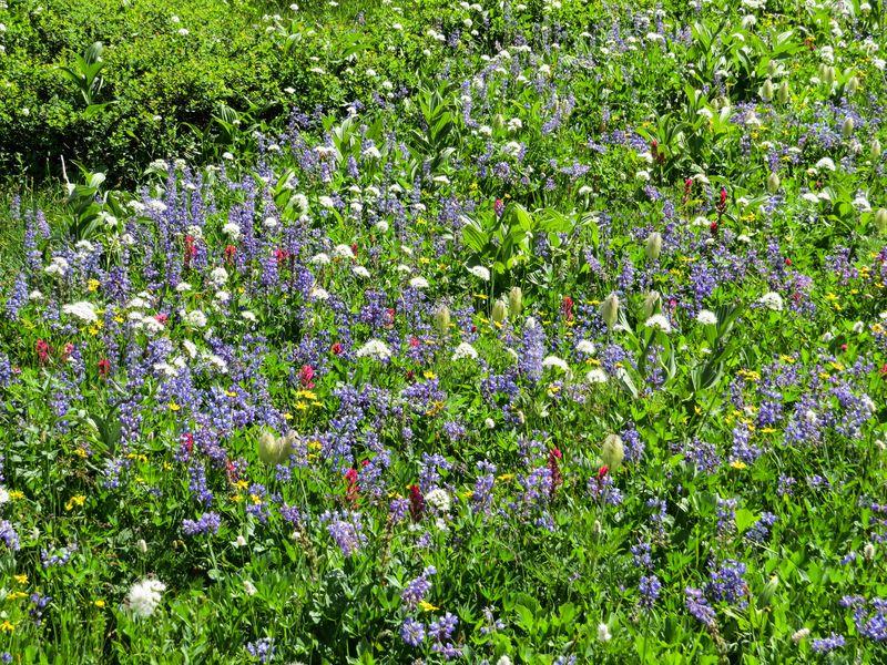 A meadows 3-1