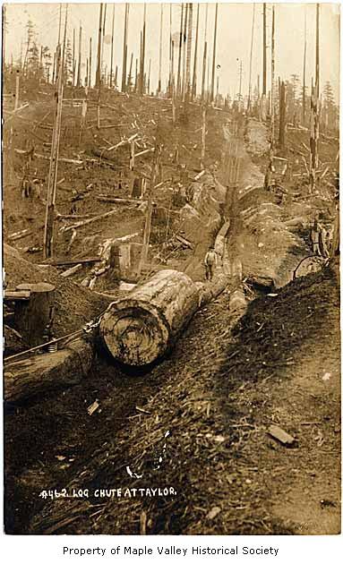 Log chute taylor