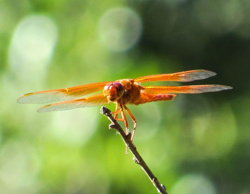 A dragonfly 5-1