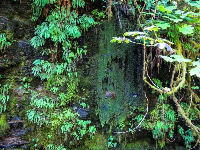 A moss wall-1
