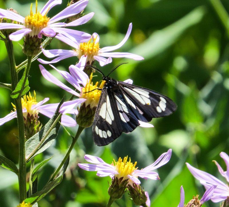 A moth 5-1