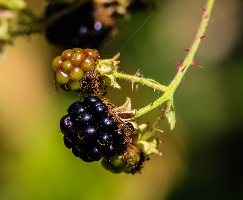 A berry 3-1