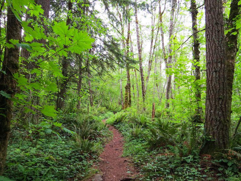 A trail 5-1