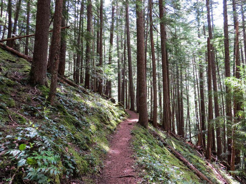 A trail-1