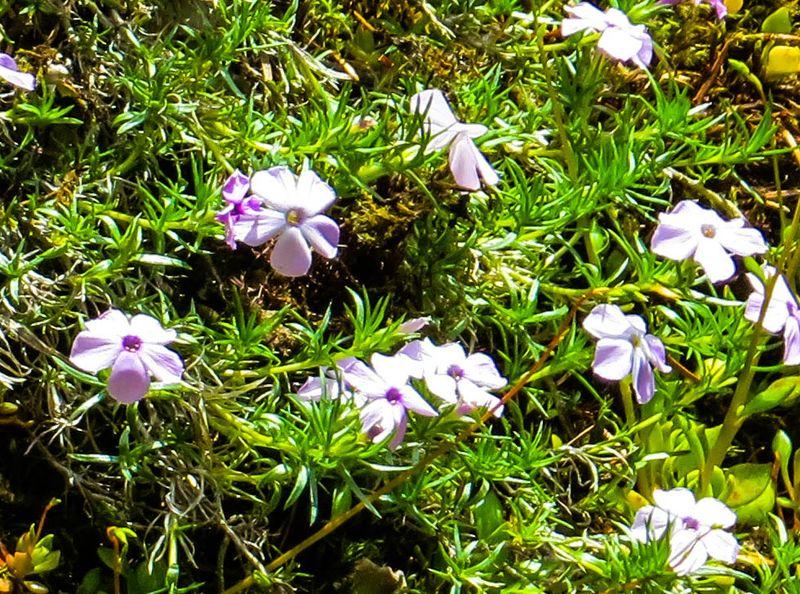 A wildflowers 3-1