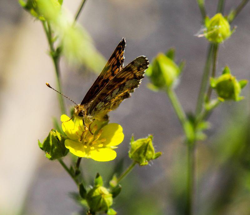 Butterfly 1-1