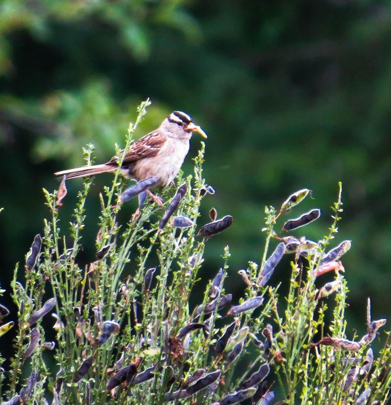 A bird 6-1