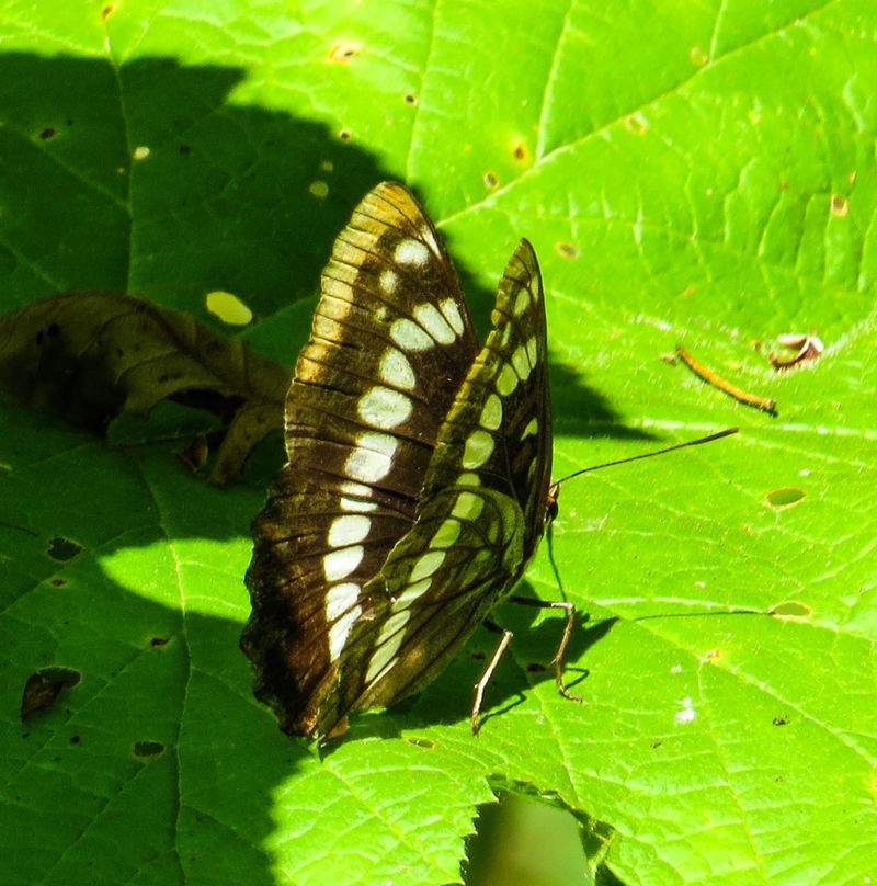 A butterfly-1